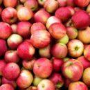 Диета с высоким содержанием фруктов может помочь женщинам забеременеть