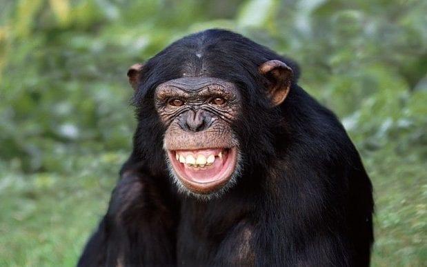 Приматы могут послужить примером для человека в уходе за своей постелью