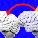 Учёным удалось перенесли память от одного слизня другому — возможно, в будущем это станет возможно и с людьми