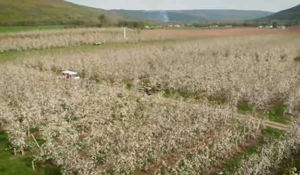 Из-за вымирания пчел вместо них сады начали опылять дроны