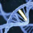 Исследователи DARPA планируют повысить сопротивляемость болезням с помощью «настройки» генов