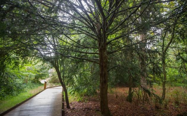 Изделия из биологически разлагающейся пластмассы на основе «древесного клея» появятся через пять лет