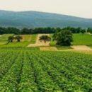 Сточные воды как способ содействия мировому сельскому хозяйству и экономике