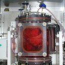 Через пять лет станет возможным выращивание человеческих органов для трансплантации