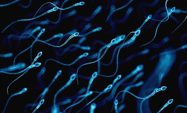 Мужчины, которые не носят обтягивающих трусов, имеют сперму более высокого качества