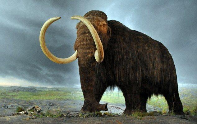 Российские учёные намерены клонировать шерстистого мамонта, используя ДНК, полученную из останков времён ледникового периода