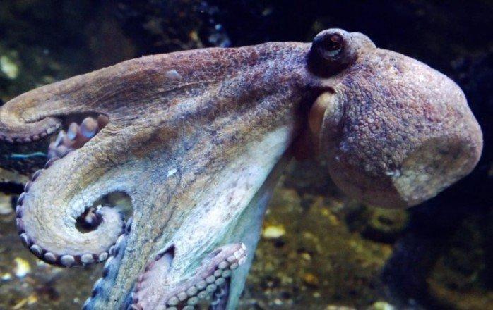 Экстази заставило застенчивых осьминогов заняться обниманием, подобно людям на вечеринке