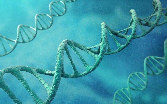 Гены играют важную роль при выборе школьником жизненного пути
