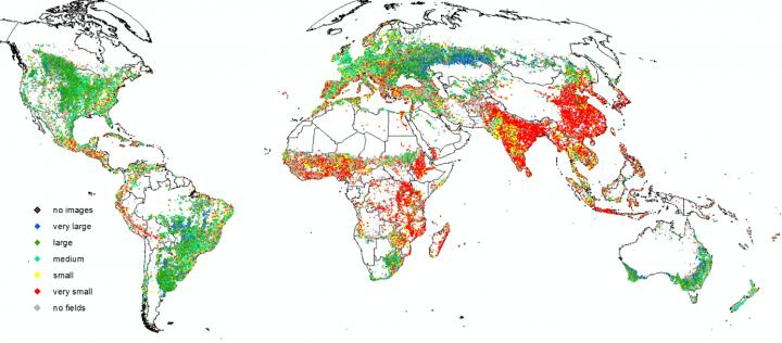 Собранные учеными данные говорят о более важной роли мелких фермерских хозяйств в глобальном производстве продовольствия