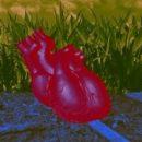 Ученые заставили сердечную ткань, выращенную в лаборатории, биться как настоящее сердце