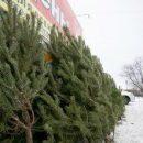 Иголки с новогодней елки в будущем можно будет перерабатывать в экологически безопасные полезные продукты