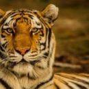 Новая математическая модель может помочь сохранению исчезающих видов