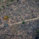 Заброшенные поля зарастают лесом в пять раз быстрее, чем считалось ранее