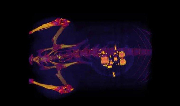 Крохотный имплант, использующий воздействие света, поможет бороться с недержанием