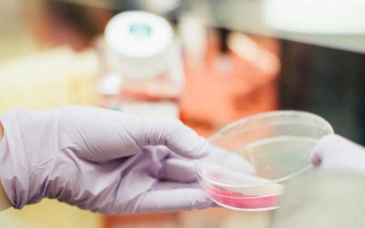 Разработанные учеными молекулы-регенераторы кожи стимулируют быстрое заживление ран