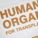 Прорыв в области трансплантации печени может вдвое сократить лист ожидания на пересадку