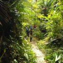 Почему жить в окружении зелёных насаждений полезно для здоровья