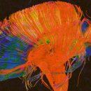 Химики создали «синтетический мозг», хранящий воспоминания в серебряных нанопроводах