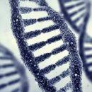 Секрет счастливого брака кроется в генах, считают учёные