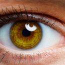 Прорывные методы генной терапии позволили вернуть зрение слепым мышам