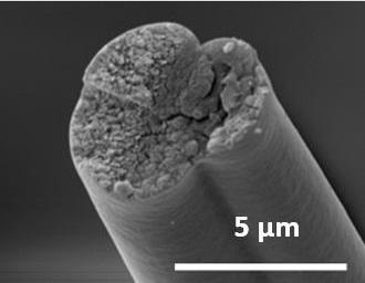 Фабрики бактерий помогут производить уникальные белки в далеких космических экспедициях