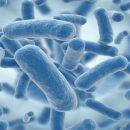 Нетрадиционная сексуальная ориентация меняет микрофлору кишечника