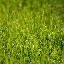 DAPRA разрабатывает «умный газон», который кричит на нарушителей воинской дисциплины