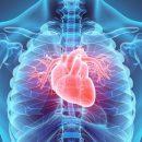 Риски проблем с сердцем кроются в эволюции человека