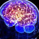 Мозг широко эрудированных людей отличается хорошими ассоциативными связями