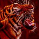В зоопарках из-за коронавируса, возможно, придется скармливать одних животных другим